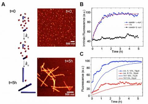 Time resolved fluoroescent microscopy used to study protein misfolding and aggregation. Both processes lie at the root of neurodegenerative diseases.